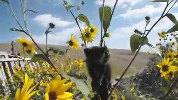 Ricky - Watch A Kitten Get Rescued After Becoming Stuck In A Sunflower