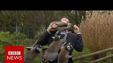 Gina - Reporter Gets Mobbed by Lemurs