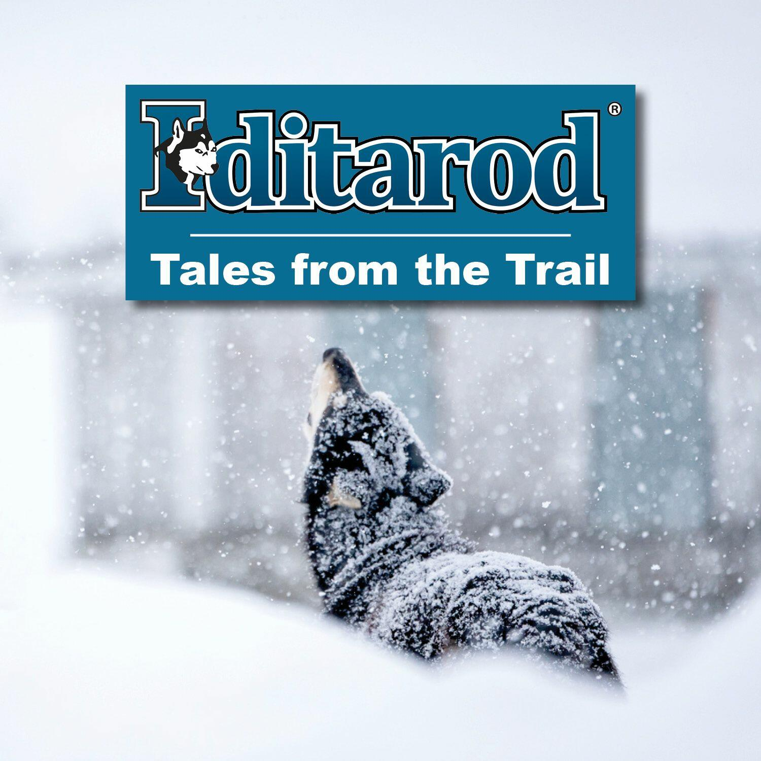 The Iditarod Tales from the Trail