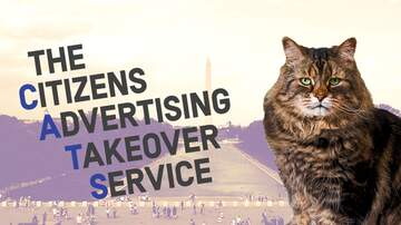 Tessa Hall - Want Cats to Take Over DC Metro?