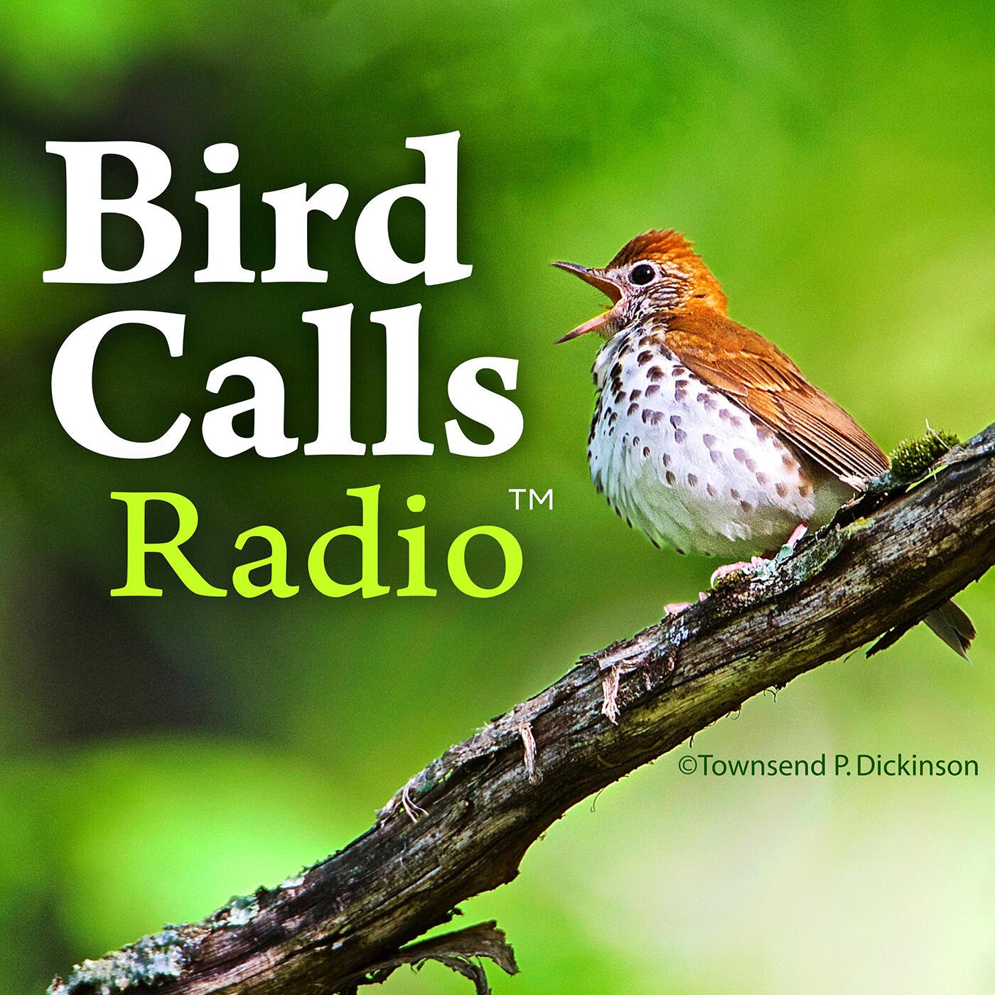 BirdCallsRadio