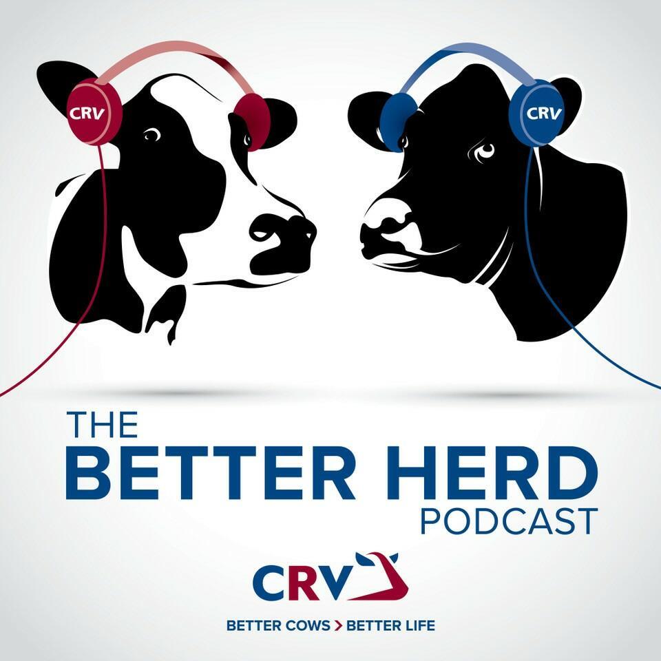 The Better Herd Podcast
