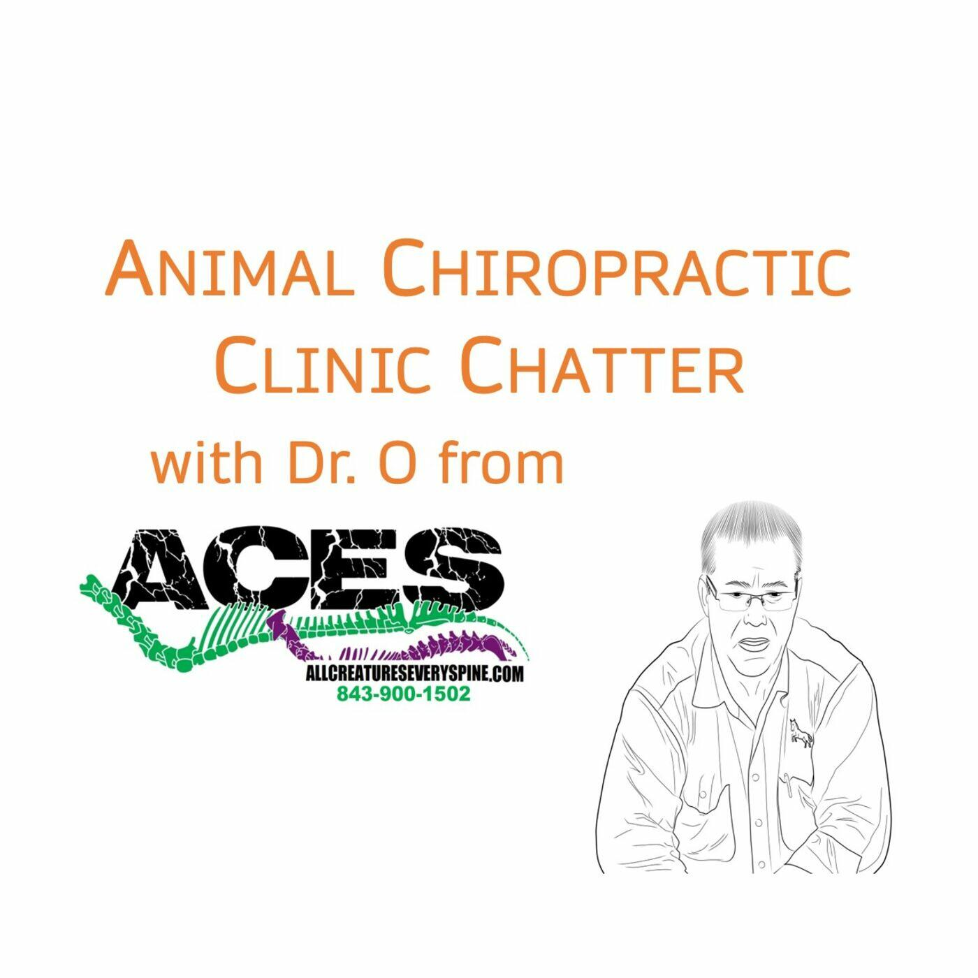 Animal Chiropractic Clinic Chatter