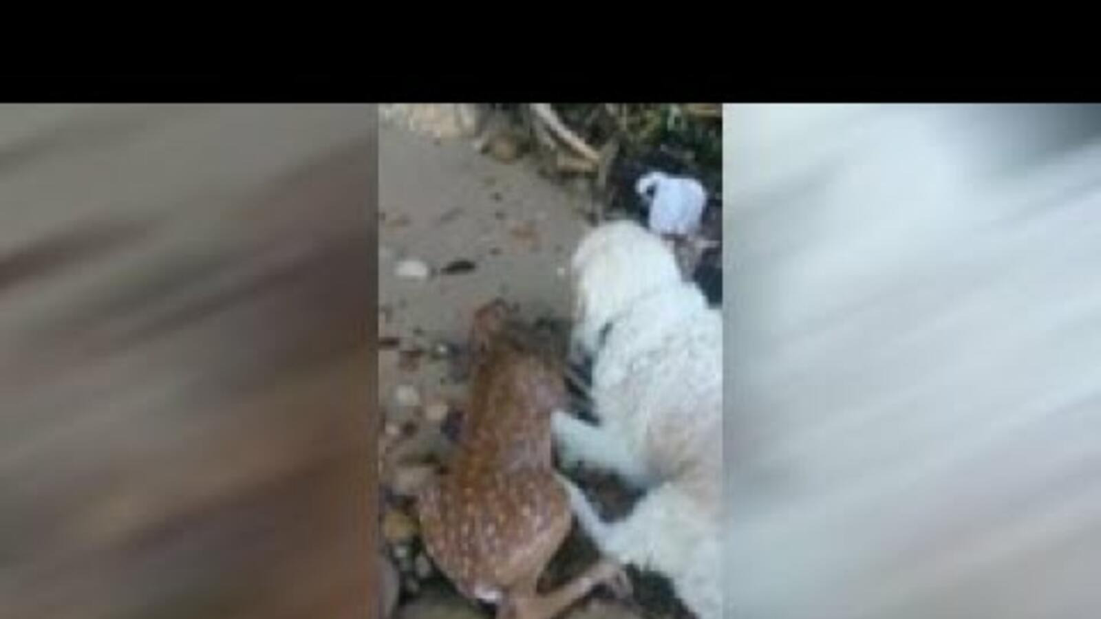 Heroic Dog Saves Fawn from Drowning